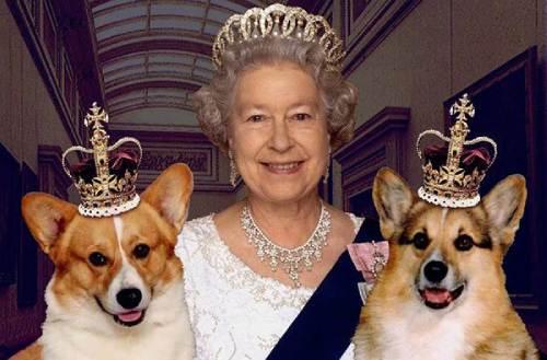 Elizabeth II & her corgis
