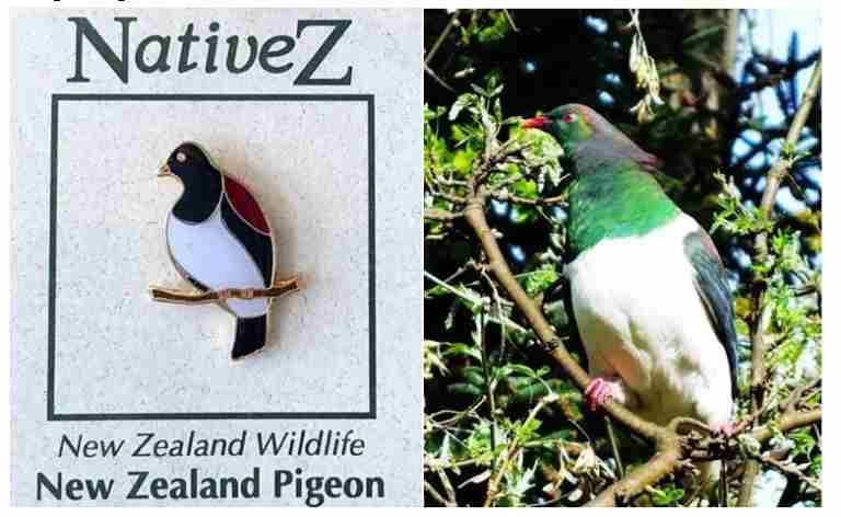 New Zealand Pigeon